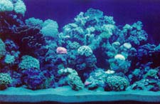 Maintaining your aquarium should be done by a professional